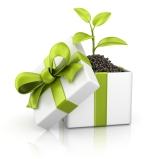 Give 'green': Sustainable gift ideas for alloccasions
