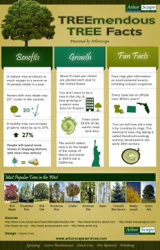 TREEmendous-TREE-Facts