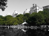 Green Cities: Urban Forestry in NYC, Chicago and Seattle