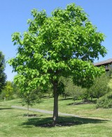 History, growth, celebrating Arbor Day 2014