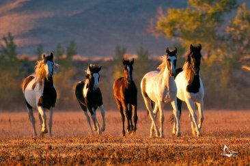 nevada_s_wild_mustangs_xi_by_eaross-d5iz0py