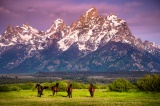 Conserving our Heritage: The Western Plains and WildMustangs